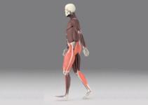 musculos caminar